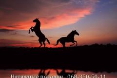 Натяжные потолки Кривой Рог Фото Цены (77)
